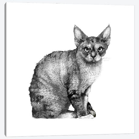 Angry Cat Canvas Print #FAU57} by Eric Fausnacht Canvas Print