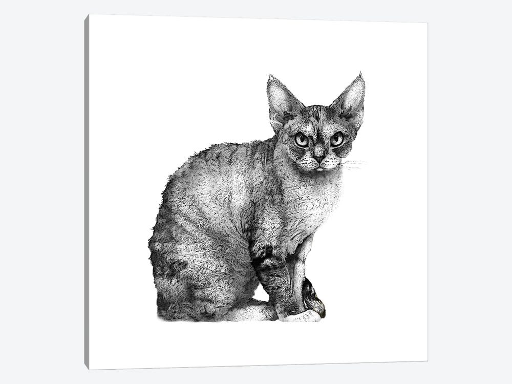 Angry Cat by Eric Fausnacht 1-piece Canvas Art Print