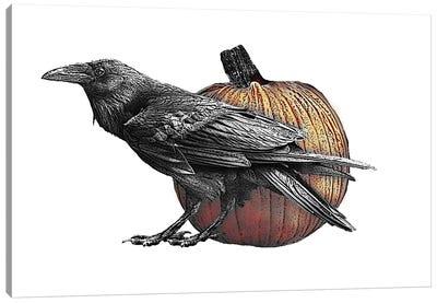 Raven With Pumpkin Canvas Art Print