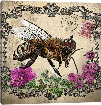 Bee And Pink Clover Canvas Art Print