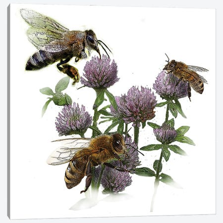 Bees And Clover Canvas Print #FAU76} by Eric Fausnacht Canvas Print
