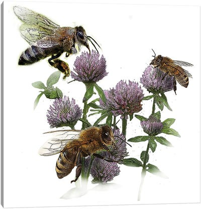 Bees And Clover Canvas Art Print