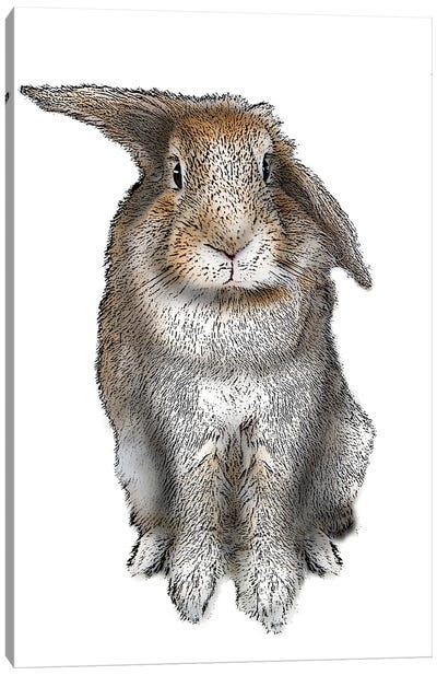 5 O'Clock Rabbit Canvas Art Print