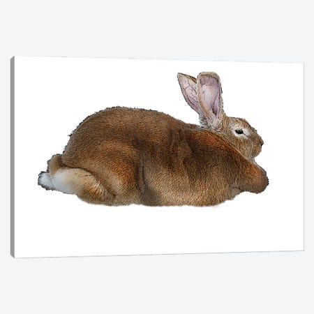 Brown Rabbit 3-Piece Canvas #FAU81} by Eric Fausnacht Canvas Art Print
