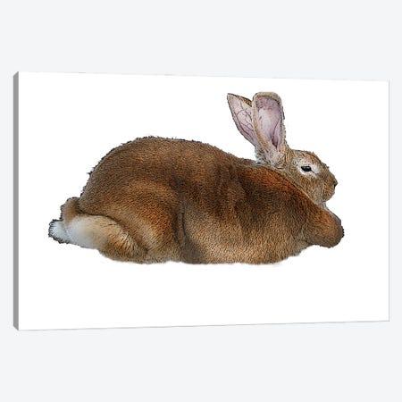 Brown Rabbit Canvas Print #FAU81} by Eric Fausnacht Canvas Art Print