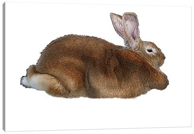 Brown Rabbit Canvas Art Print