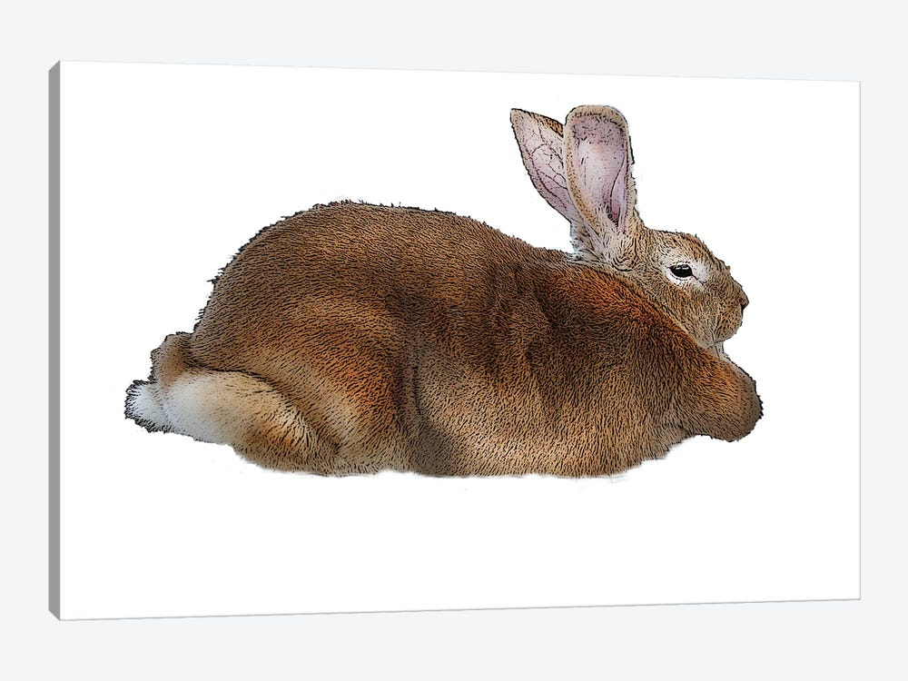 Brown Rabbit by Eric Fausnacht 1-piece Canvas Artwork