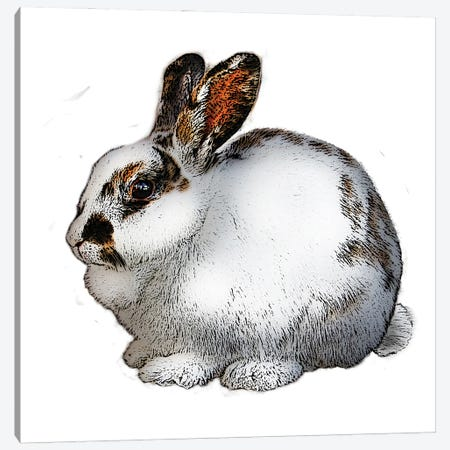 White And Black Rabbit Canvas Print #FAU82} by Eric Fausnacht Canvas Print