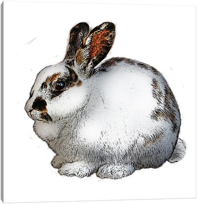 White And Black Rabbit Canvas Art Print