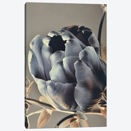 Baroque III Canvas Print #FBK10} by Design Fabrikken Canvas Art
