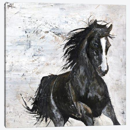 Wild Horse I Canvas Print #FBK153} by Design Fabrikken Canvas Print