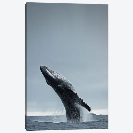 40 Ton Canvas Print #FBK157} by Design Fabrikken Canvas Wall Art