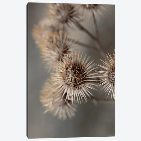 Avantgarde Canvas Print #FBK168} by Design Fabrikken Canvas Artwork