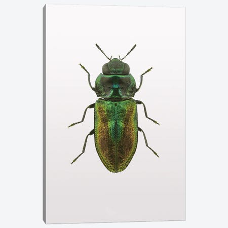 Beetle I Canvas Print #FBK172} by Design Fabrikken Canvas Print