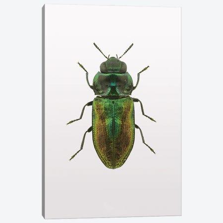 Beetle I Canvas Print #FBK172} by Design Fabrikken Canvas Print