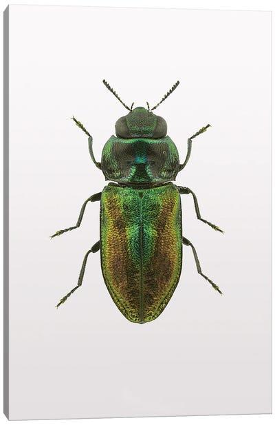 Beetle I Canvas Art Print