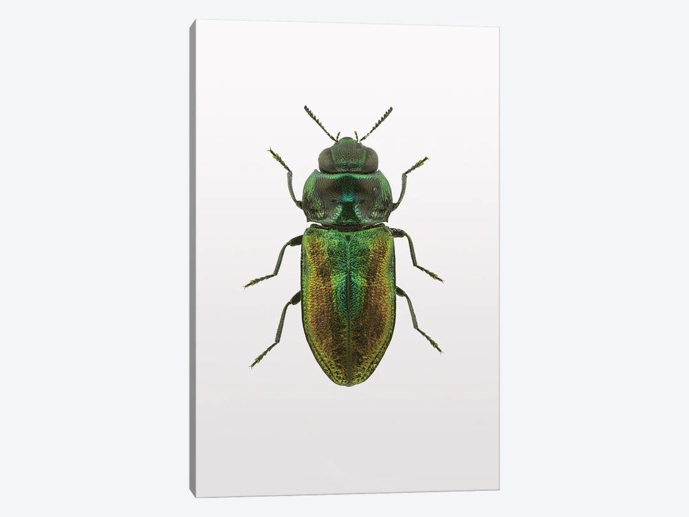 Beetle I by Design Fabrikken 1-piece Art Print