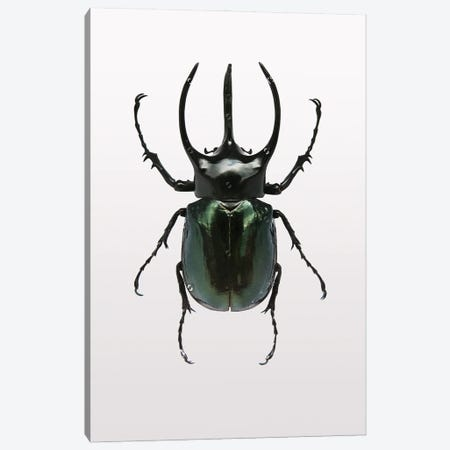 Beetle II Canvas Print #FBK173} by Design Fabrikken Canvas Art Print