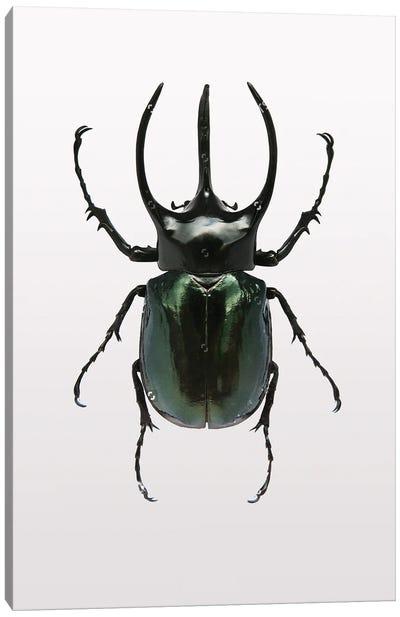 Beetle II Canvas Art Print