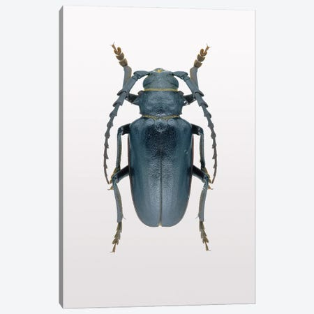 Beetle III Canvas Print #FBK174} by Design Fabrikken Canvas Artwork