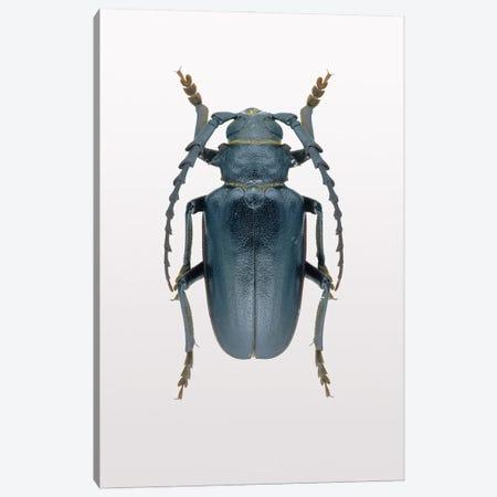 Beetle III Canvas Print #FBK174} by Design Fabrikken Canvas Artwork