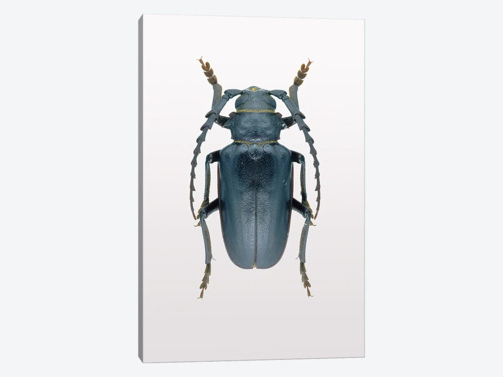 Beetle III by Design Fabrikken 1-piece Canvas Print