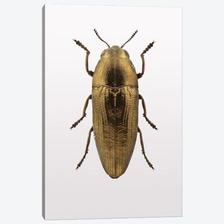 Beetle IV Canvas Print #FBK175} by Design Fabrikken Canvas Artwork