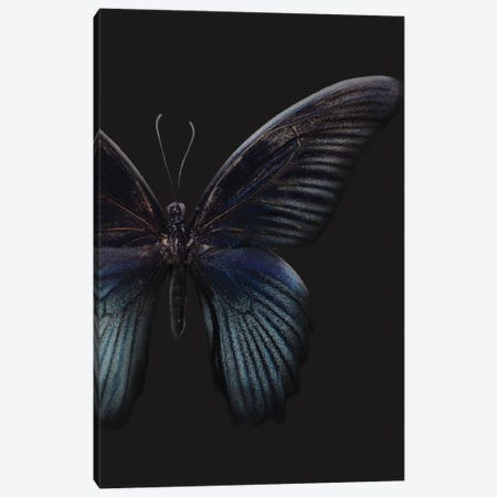 Black Butterfly on Grey Canvas Print #FBK203} by Design Fabrikken Art Print