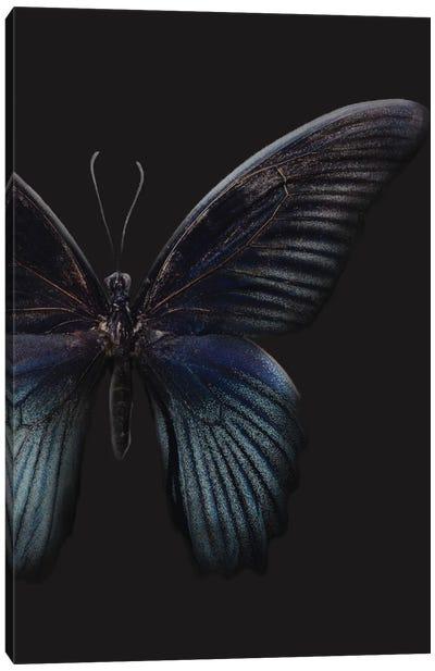 Black Butterfly on Grey Canvas Art Print