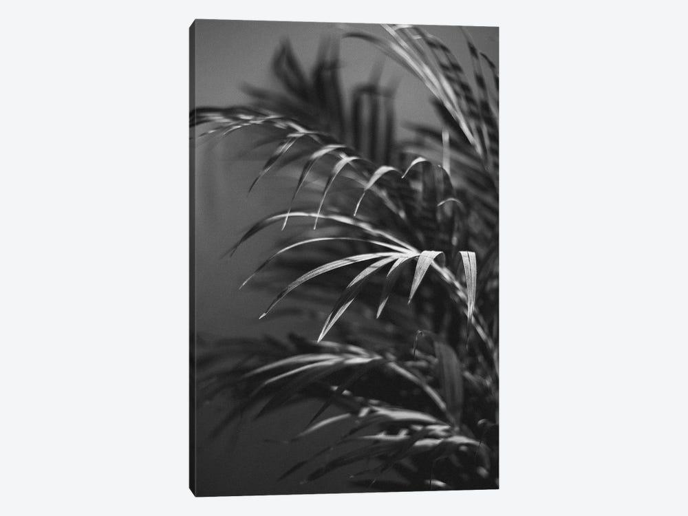 Black Plant by Design Fabrikken 1-piece Canvas Print