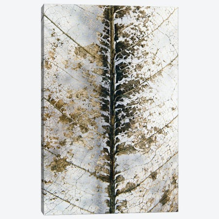 Close Up Canvas Print #FBK232} by Design Fabrikken Canvas Wall Art