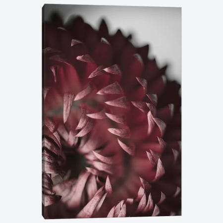 Dahlia Canvas Print #FBK240} by Design Fabrikken Canvas Print