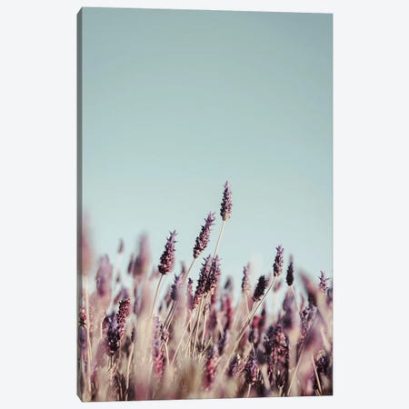 Field Haze Canvas Print #FBK259} by Design Fabrikken Canvas Wall Art