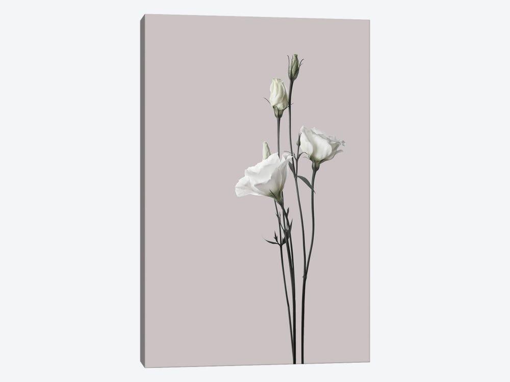 Flower II by Design Fabrikken 1-piece Canvas Print