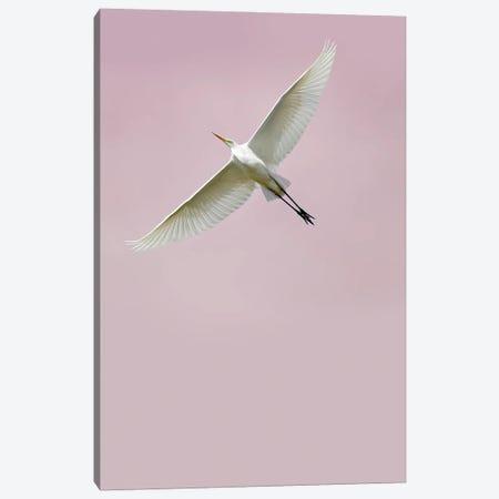 In the Sky II Canvas Print #FBK311} by Design Fabrikken Canvas Art Print