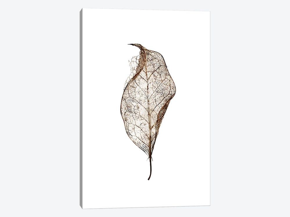 Leaf by Design Fabrikken 1-piece Canvas Print