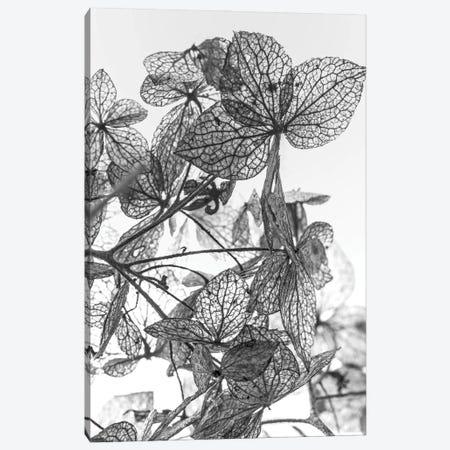 Leaf Composition Canvas Print #FBK318} by Design Fabrikken Art Print
