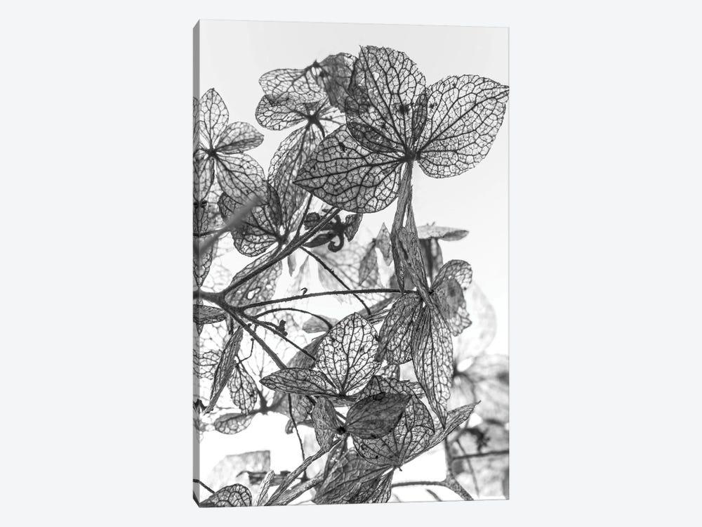 Leaf Composition by Design Fabrikken 1-piece Canvas Wall Art