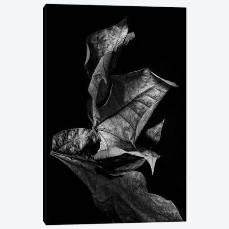Leaf Composition, Dark Canvas Print #FBK319} by Design Fabrikken Canvas Art Print