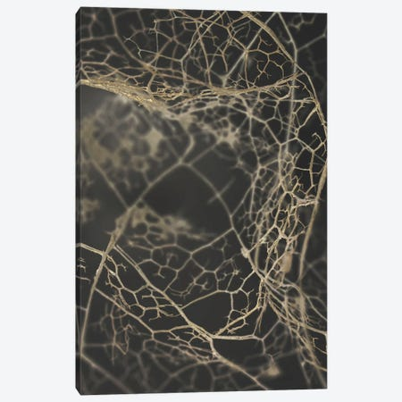 Leaf Skeleton Dark Canvas Print #FBK322} by Design Fabrikken Canvas Artwork