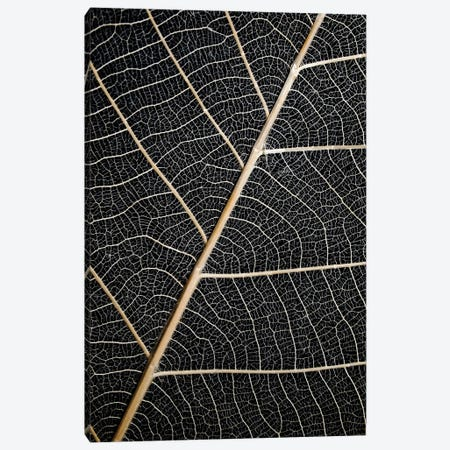 Leaf Veins Canvas Print #FBK323} by Design Fabrikken Canvas Artwork