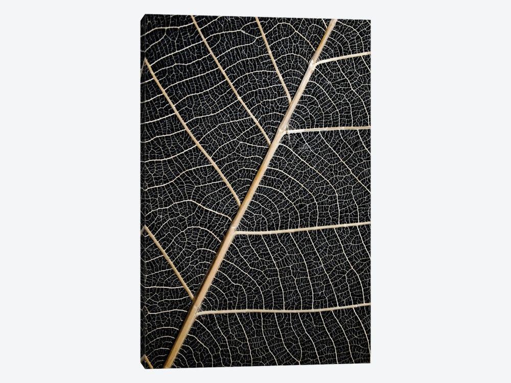 Leaf Veins by Design Fabrikken 1-piece Canvas Wall Art