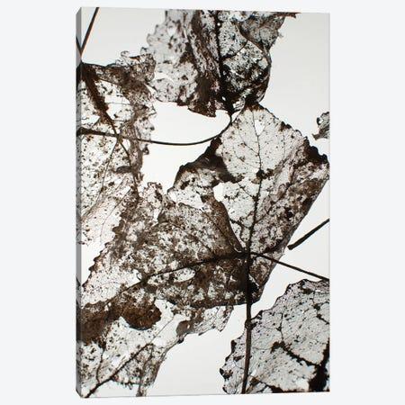 Leaves Canvas Print #FBK324} by Design Fabrikken Art Print