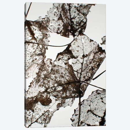 Leaves Canvas Print #FBK324} by Design Fabrikken Art Print