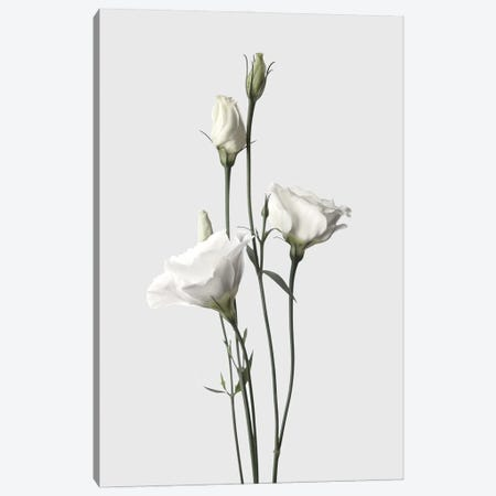 Lisianthus White Canvas Print #FBK329} by Design Fabrikken Canvas Artwork