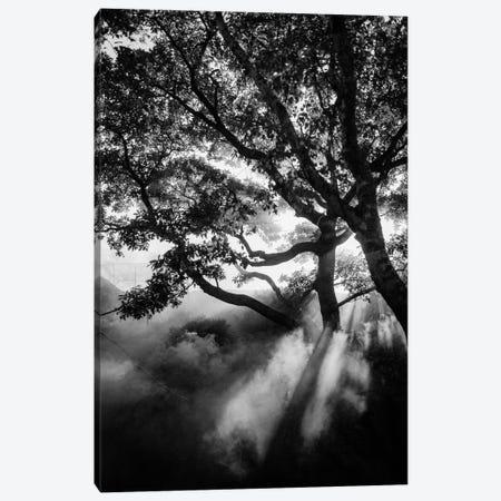 Misty Black Canvas Print #FBK340} by Design Fabrikken Canvas Artwork