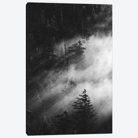 Misty Pine Woods Canvas Print #FBK341} by Design Fabrikken Canvas Art