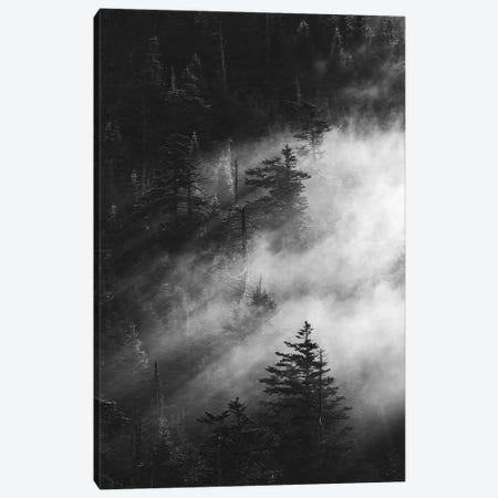 Misty Pine Woods Canvas Print #FBK341} by Design Fabrikken Canvas Art