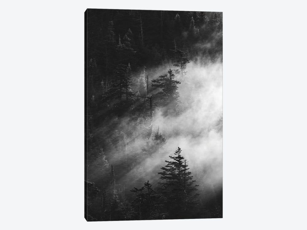 Misty Pine Woods by Design Fabrikken 1-piece Canvas Wall Art