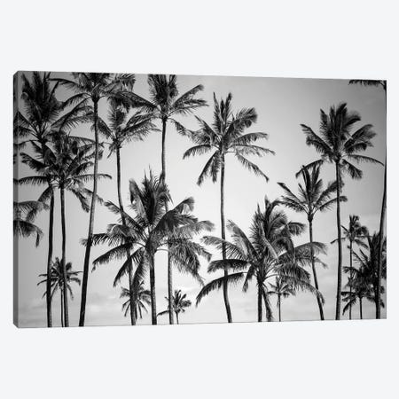 Palm Heaven Canvas Print #FBK359} by Design Fabrikken Art Print